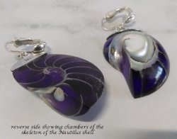 Clip On Earrings, Nautilus Shell, Purple Tones, Sterling Silver